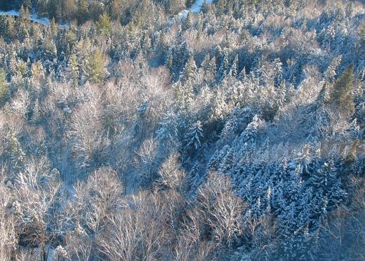 Lake Placid Trees